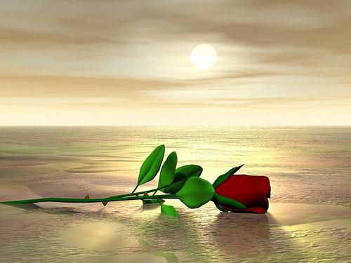 Rosa – Glitter Amore