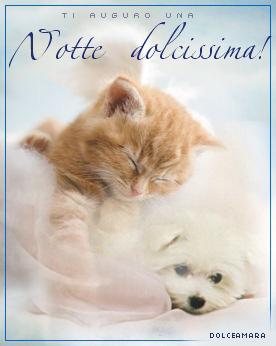 NotteDolcissima