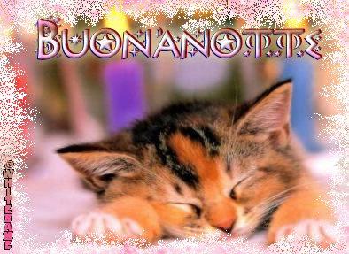 buonanotte-cat