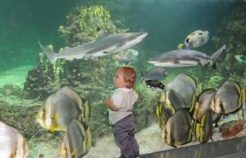 Weekend con i bambini viaggi ad Acquario di Genova