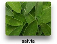 salvia2