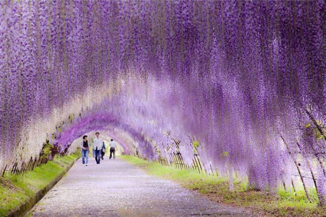 Fiore Tunnel Glyatsiny Giappone