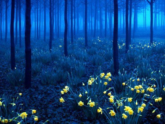 Foresta Nera Germania