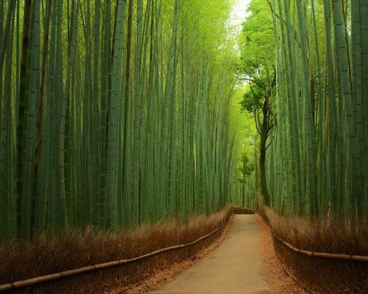 Foresta Di Bambù Giappone