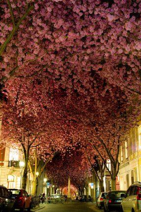 Una Strada A Bonn Germania