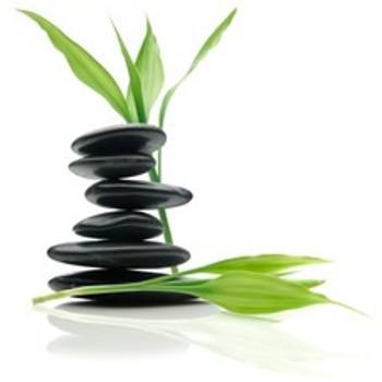 Piante che attirano energie positive
