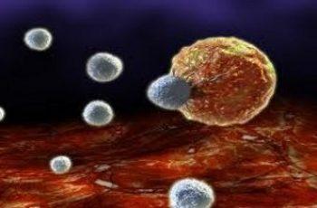 Il cancro è un fungo nuova teoria