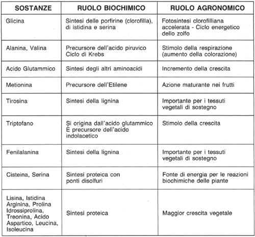 Amminoacidi