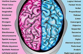 Diferenze del cervello tra donne e e uomini