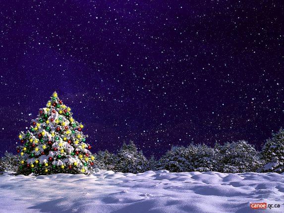 Albero di Natale addobbato mezzo a bosco