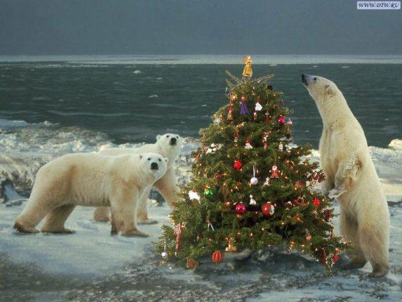 Orsi bianchi con albero di Natale